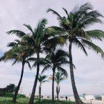 OHC語言學校-邁阿密